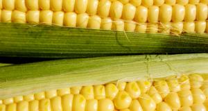 corn_