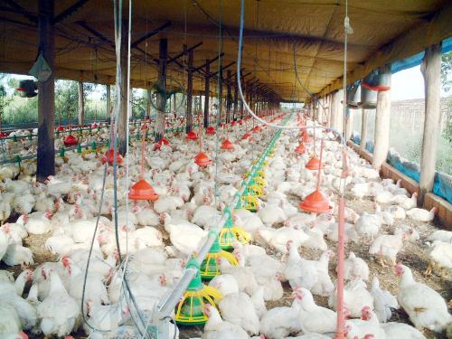 País é o único dos grandes exportadores de proteína com potencial para ampliar significativamente a oferta de carnes no longo prazo